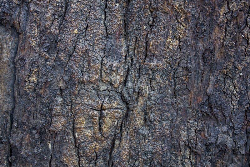 Struttura naturale della superficie di legno Superficie ruvida fotografie stock
