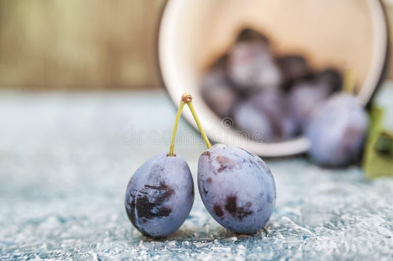 Struttura naturale di frutta Prugne succose mature su una fine blu del fondo su e risparmiare spazio fotografia stock libera da diritti