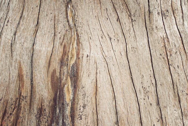 Struttura naturale Struttura di legno del taglio del primo piano con l'albero bruciante della struttura immagine stock