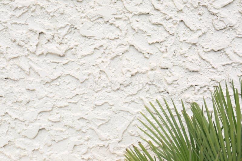 Struttura ondulata dello stucco del cemento con le fronde della palma fotografia stock