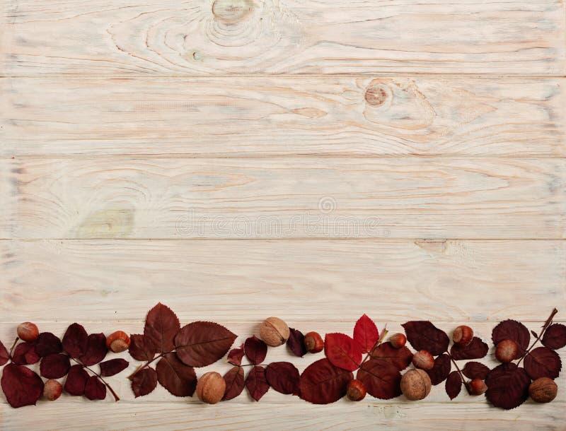 Struttura piana di disposizione delle foglie di autunno, delle nocciole e delle noci cremisi o fotografia stock