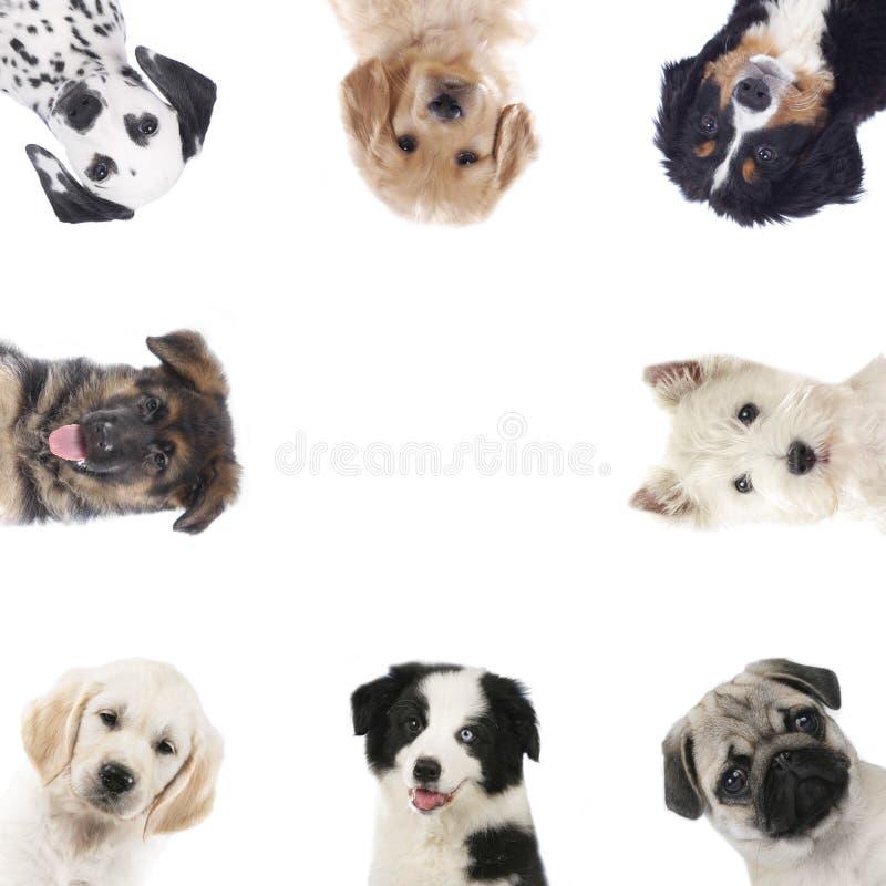 Struttura quadrata dei cuccioli differenti, cani fotografie stock libere da diritti