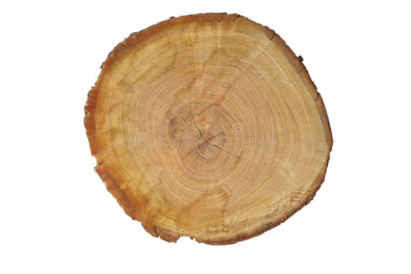 Struttura reale del taglio di legno fondo di alta risoluzione del fondo per progettazione fotografia stock
