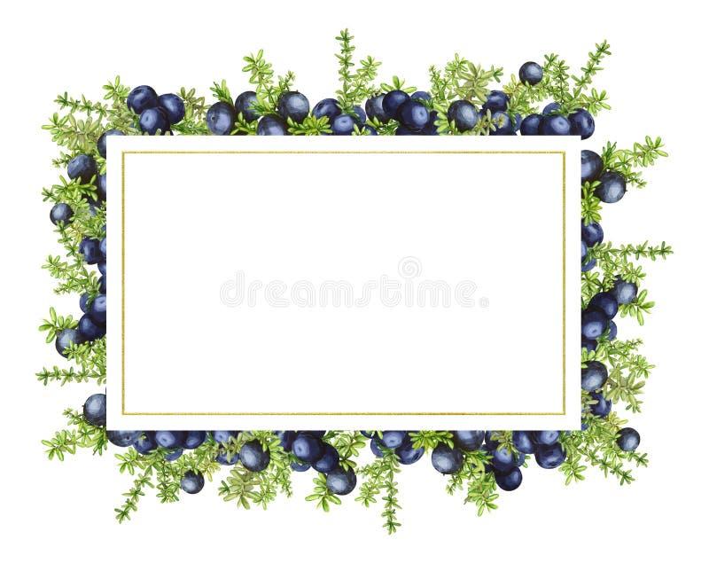 Struttura rettangolare con le bacche nordiche della foresta nera del crowberry, dipinte in acquerello Ideale per gli inviti di no royalty illustrazione gratis