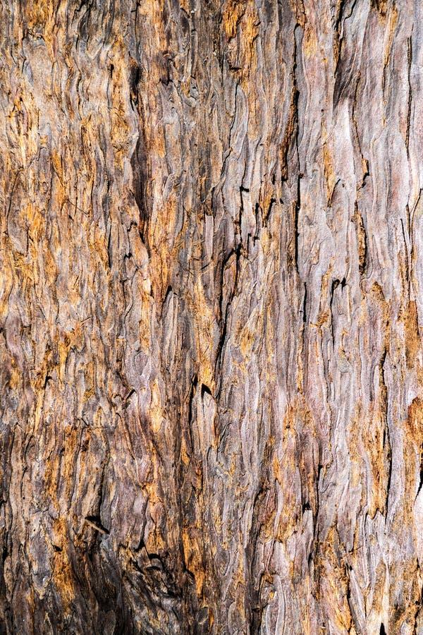 Struttura ricca di uso marrone arancio di legno della corteccia della sequoia come sfondo naturale immagini stock