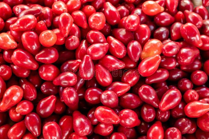 Struttura rossa di frutti del corniolo fotografie stock