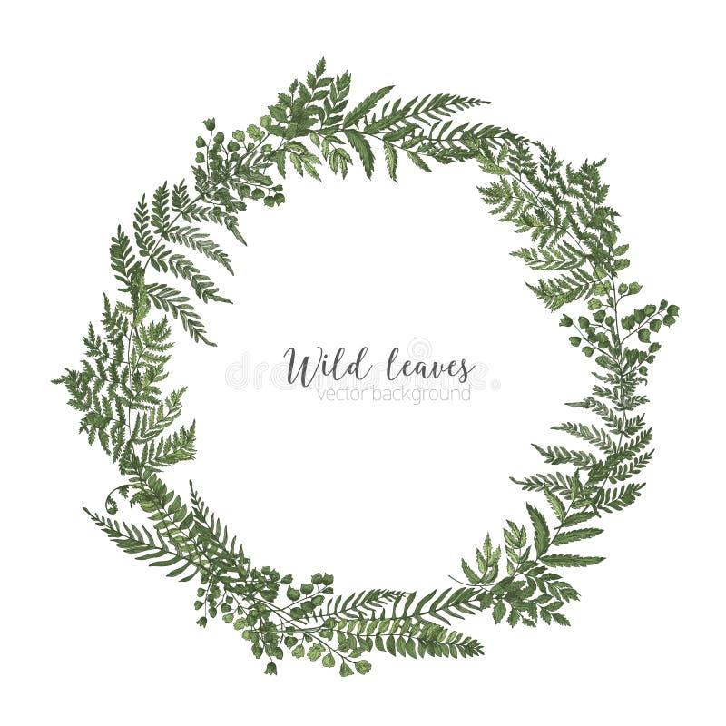 Struttura rotonda, confine o corona circolare fatti di belle felci, erbe selvagge o piante erbacee verdi isolate su bianco illustrazione di stock