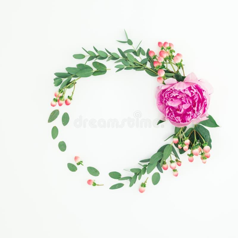 Struttura rotonda floreale con i fiori, l'iperico e l'eucalyptus rosa della peonia su fondo bianco Disposizione piana fotografia stock libera da diritti
