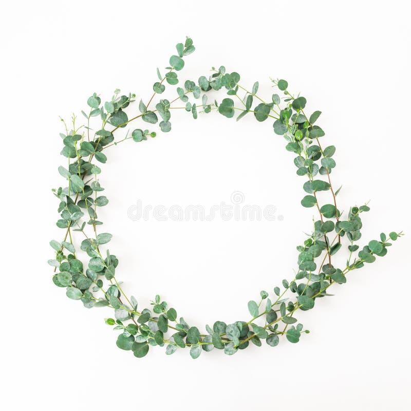 Struttura rotonda floreale con le foglie dell'eucalyptus isolate su fondo bianco Disposizione piana fotografie stock