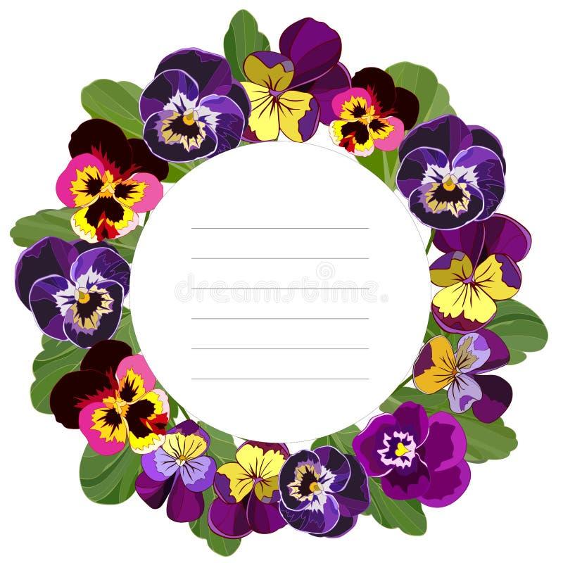Struttura rotonda per le congratulazioni delle viole del pensiero allegre luminose isolata su un fondo bianco royalty illustrazione gratis
