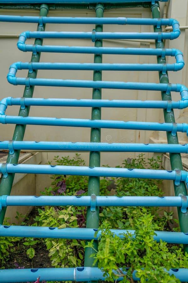 Struttura rurale idrofoba verticale nel giardinaggio organico all'aperto immagini stock libere da diritti