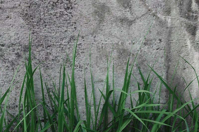 Struttura scura di Grey Coarse Concrete Stone Wall, erba verde, vecchio Gray naturale dettagliato stagionato invecchiato del macr fotografia stock