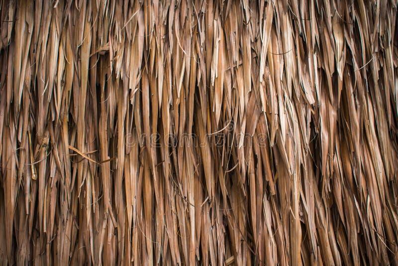 Struttura secca della noce di cocco della foglia immagini stock