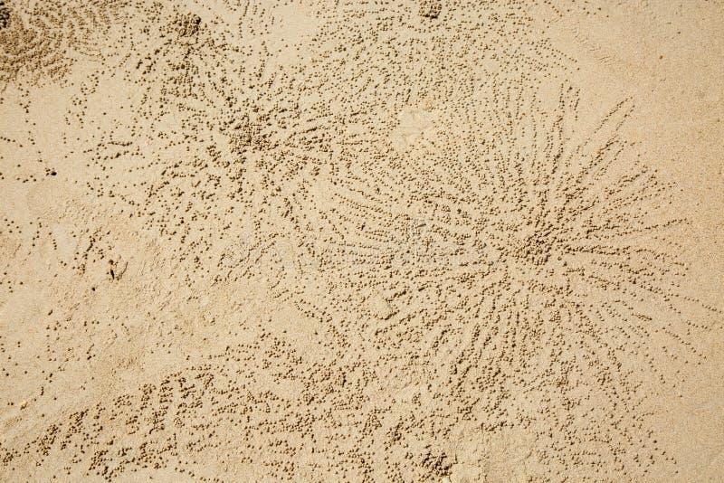 Struttura sulla sabbia Palle sabbiose intorno al foro dei granchi del fantasma della vasca di gorgogliamento della sabbia fotografia stock