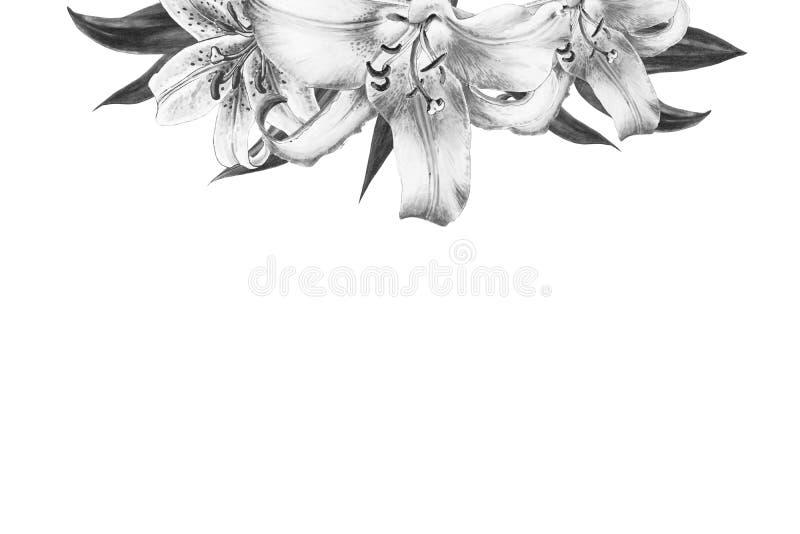 Struttura superiore del confine del bello giglio in bianco e nero Mazzo dei fiori Stampa floreale Disegno dell'indicatore fotografia stock