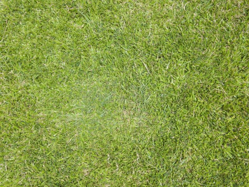 Struttura TG dell'erba fotografie stock