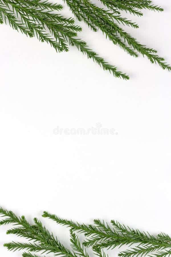 Struttura verde dei rami di pino sul fondo di Libro Bianco fotografie stock