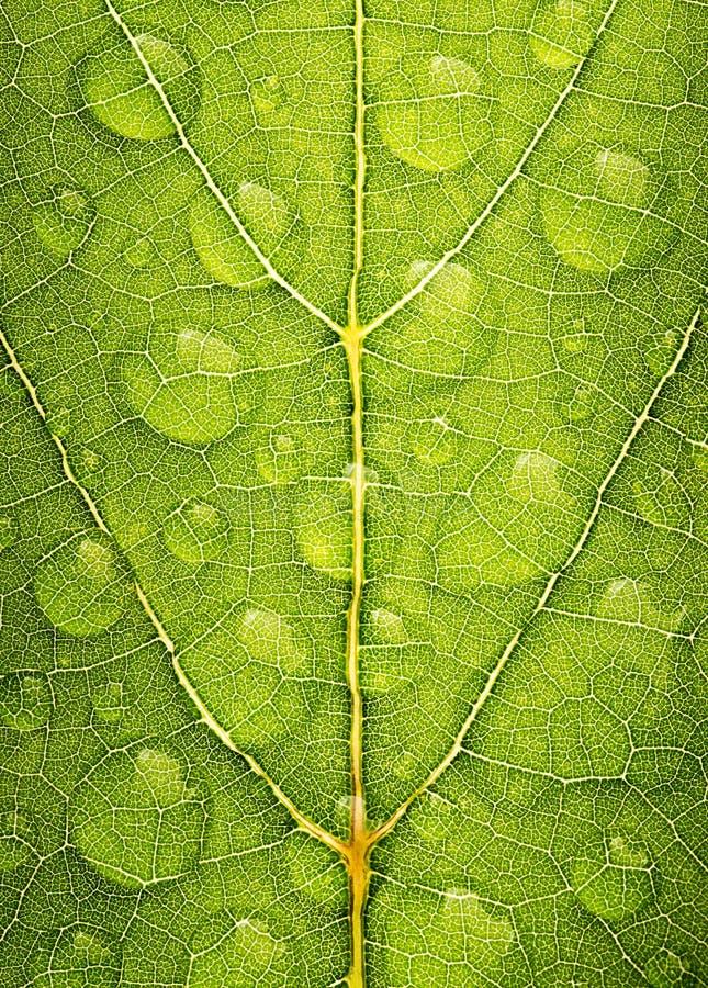 Struttura verde della foglia con la gocciolina di acqua fotografie stock libere da diritti