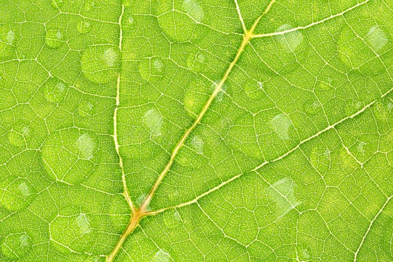 Struttura verde della foglia con la gocciolina di acqua fotografia stock libera da diritti