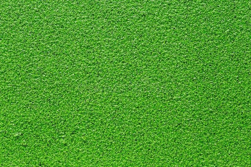 Struttura verde della lemma fotografia stock libera da diritti