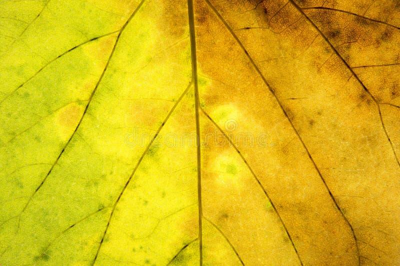 Struttura verde e gialla astratta della foglia per fondo immagini stock libere da diritti