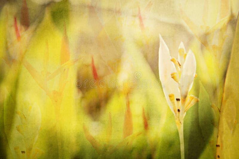Strutturato, stratificato, complesso, fondo floreale da un giardino nel Messico Acquerello di Digital fotografia stock libera da diritti