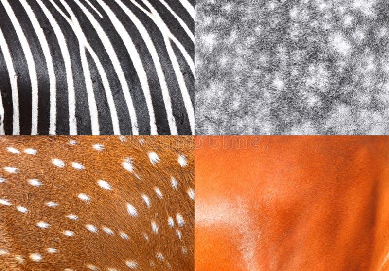 Strutture animali fotografia stock