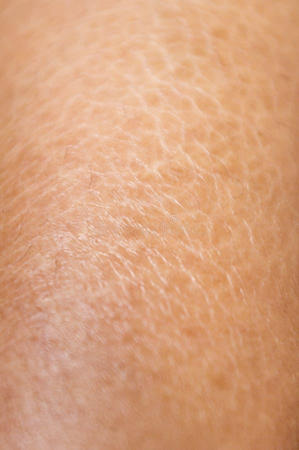 Strutture asciutte ed incrinate della pelle vicino in su fotografia stock