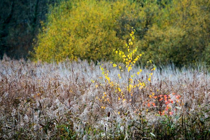 Strutture del fogliame di caduta o di autunno fotografia stock