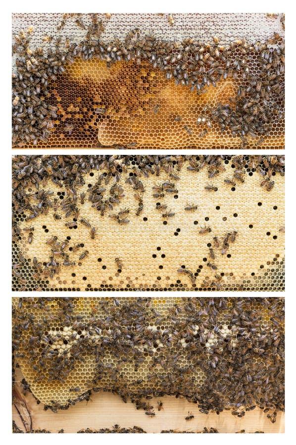 Strutture dell'alveare delle api del miele immagine stock