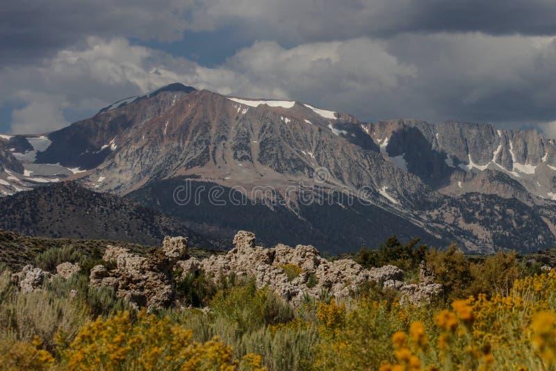 Strutture della roccia e alte montagne gialle dei fiori nel fondo fotografia stock libera da diritti