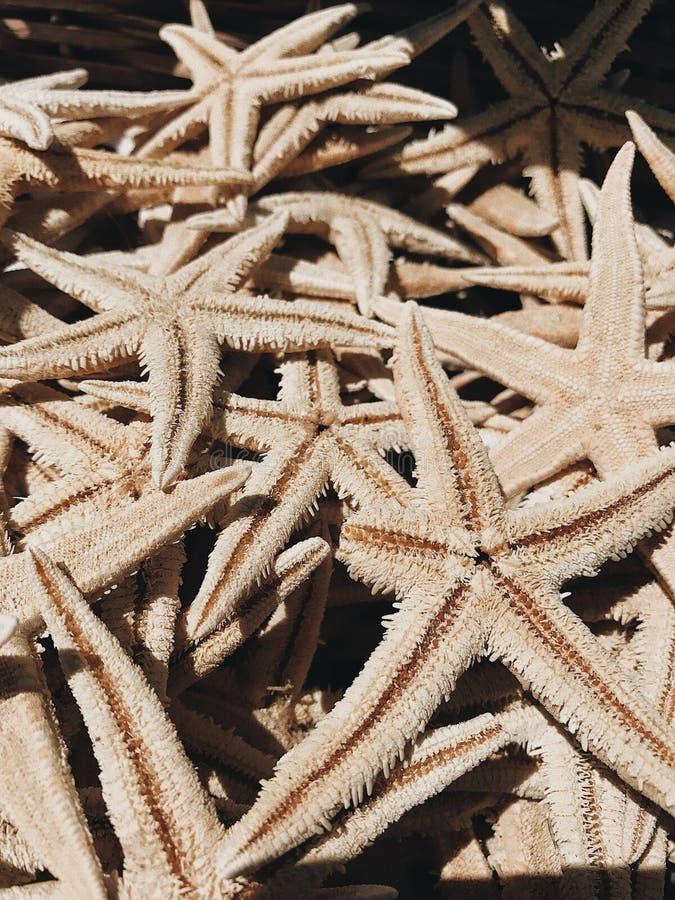 strutture della stella di mare fotografie stock