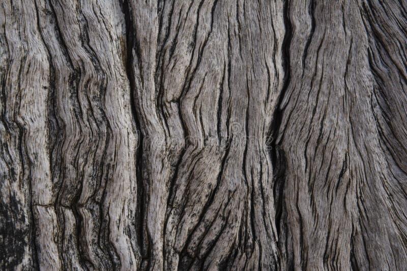 Strutture e modelli: Colonne di decomposizione di legno del pilone, rovine del molo fotografia stock