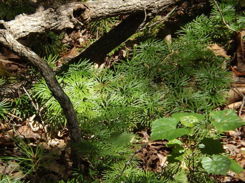 Strutture verdi uniche del terreno boscoso immagine stock libera da diritti