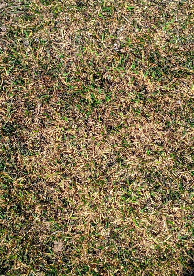 Strutturi il campo di erba verde fresca come fondo fotografia stock libera da diritti