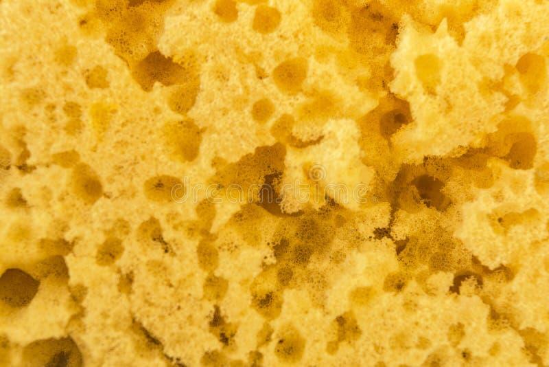 Strutturi la spugna gialla consumata per lavare i piatti, fondo astratto del primo piano fotografia stock libera da diritti