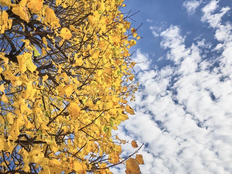 Strzał biel opuszcza drzewa i nieba nad przy parkiem zdjęcie royalty free
