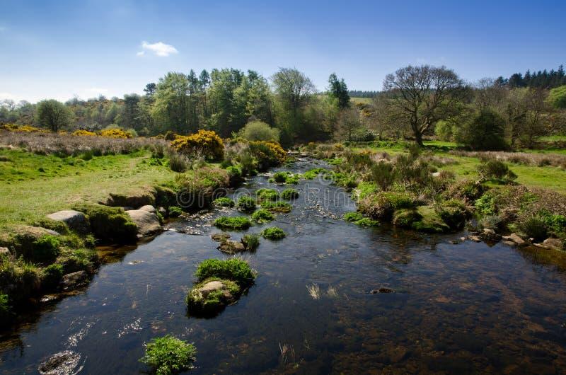 Strzałki rzeka W Wczesnym wiosna sezonie Przy Postbridge, Dartmoor Na obrazy royalty free
