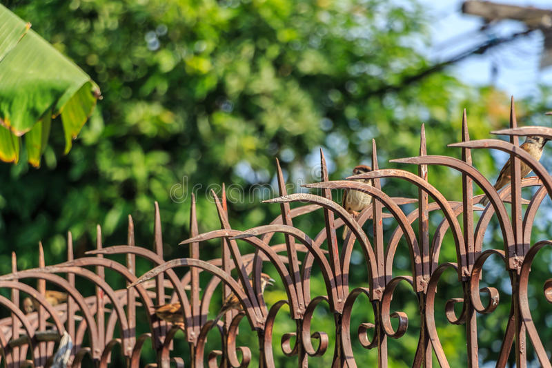 Strzałkowaty ostry kolca ogrodzenie zdjęcia royalty free