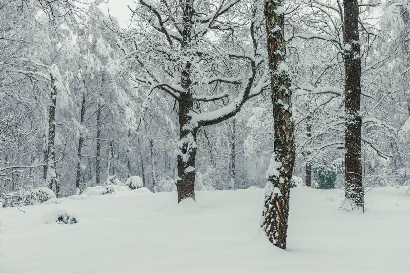 Strzelać po ciężkiego opad śniegu zimy lasu zdjęcia stock