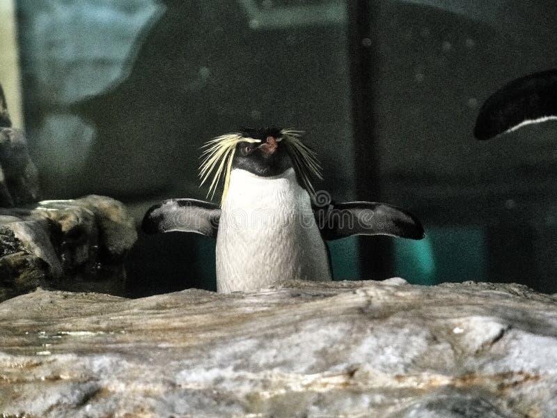 Strzelający pingwin obrazy stock