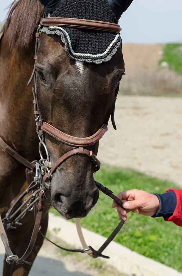 Strzelający przedstawienie bluzy koń podczas szkolenia z niezidentyfikowanym jeźdzem zdjęcia royalty free