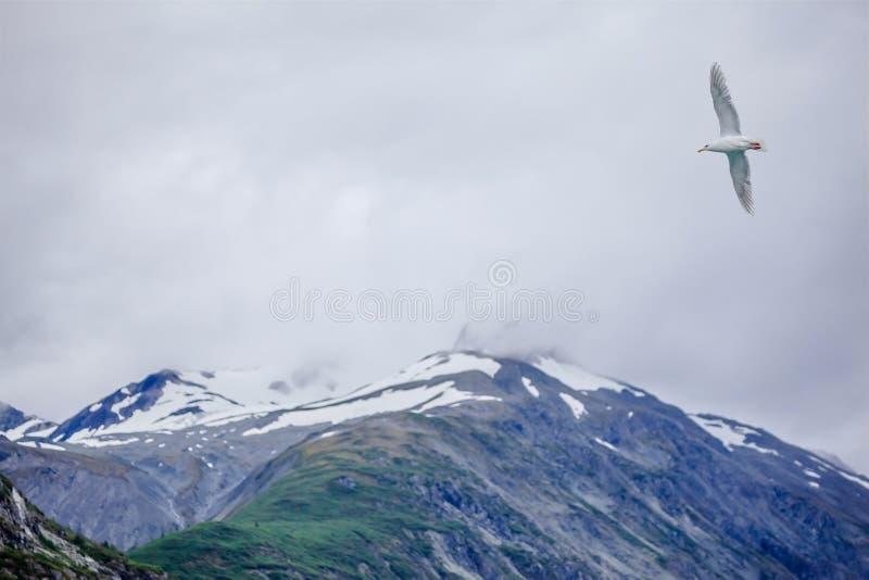 Strzelisty seagull i góra obraz royalty free