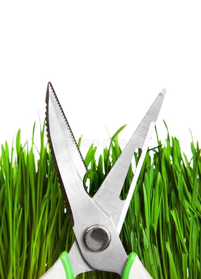 Strzyżenia na trawie zdjęcie stock
