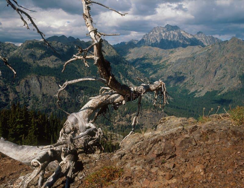 Stuart pasmo od Koppen góry, Alpejski jezioro region, Kaskadowy pasmo, Waszyngton obrazy royalty free