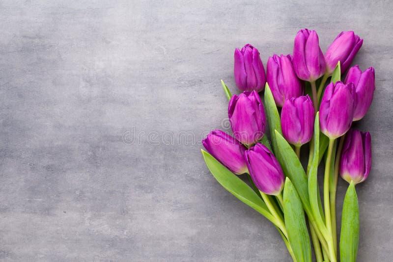 Stubarwna wiosna kwitnie, tulipan na szarym tle zdjęcia stock