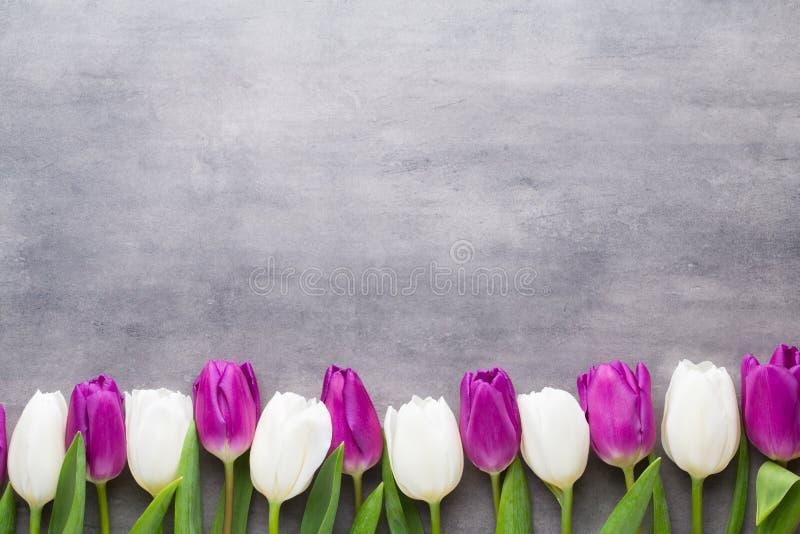 Stubarwna wiosna kwitnie, tulipan na szarym tle zdjęcia royalty free