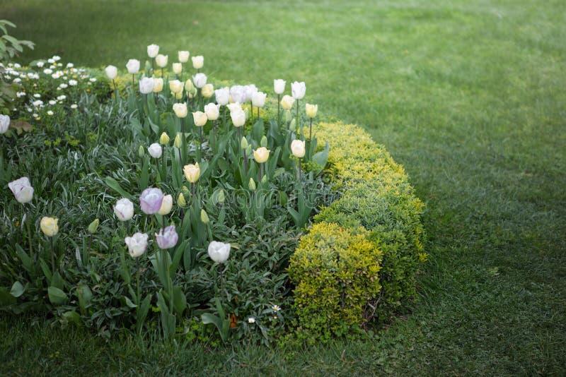 Stubarwny flowerbed na gazonie Ogrodowy Krajobrazowy projekt zdjęcie stock