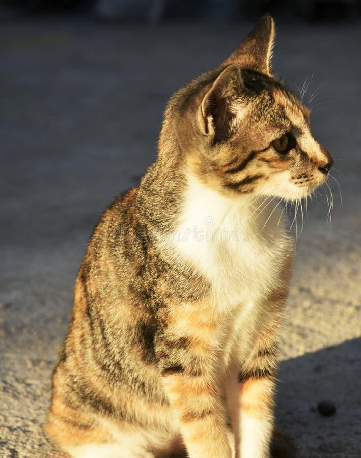 Stubarwny kot siedzi na podłoga fotografia royalty free