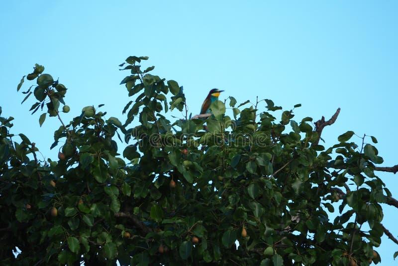 Stubarwny ptak umieszczał na gałąź, lerida obraz stock